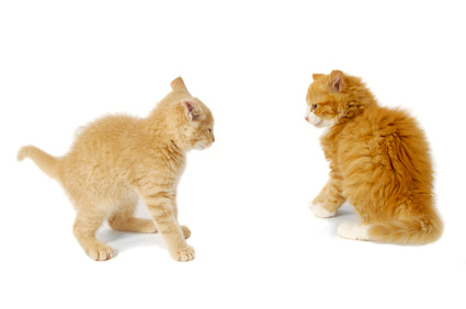 Kittens ready to fight